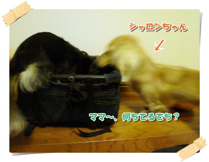 3_20111017135617.jpg
