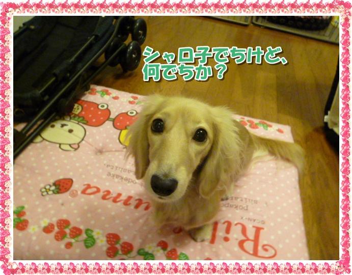 4_20111013130956.jpg