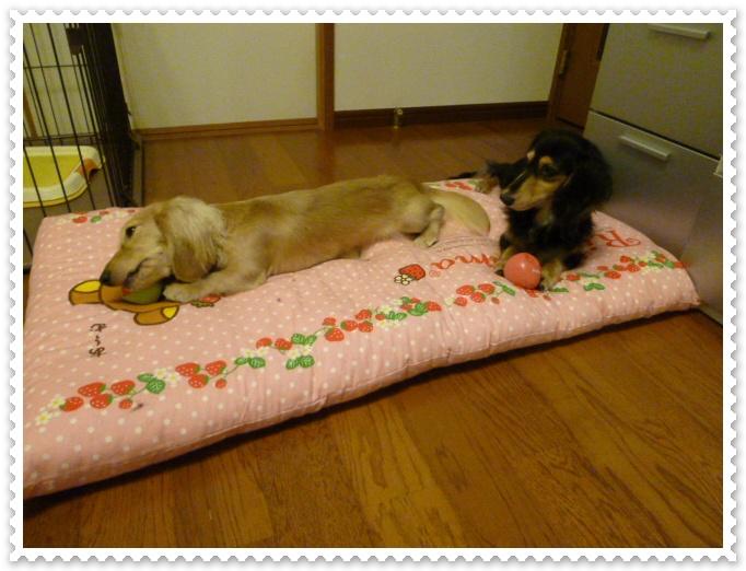 7_20111003150600.jpg