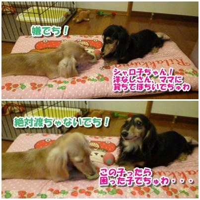 8_20111003150600.jpg
