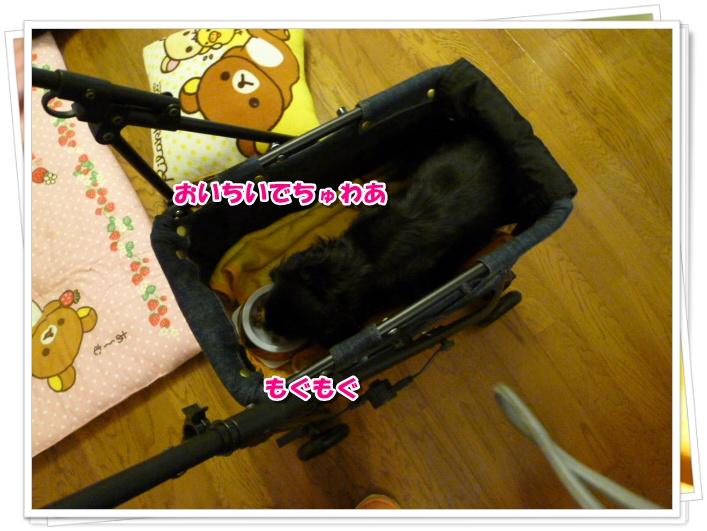 8_20111013131048.jpg