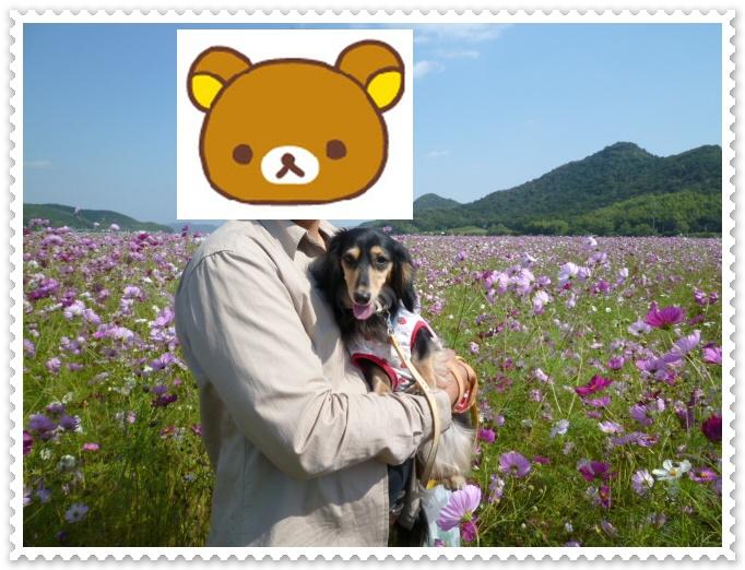 9_20111018141039.jpg