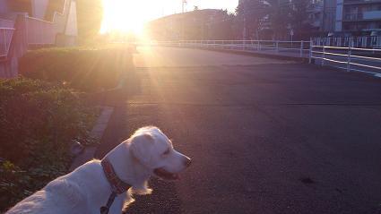 夕日に向かってお散歩