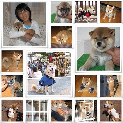 パンチ子犬と服の写真集