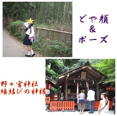 竹やぶ&野々宮神社