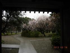 梅の庭の入口