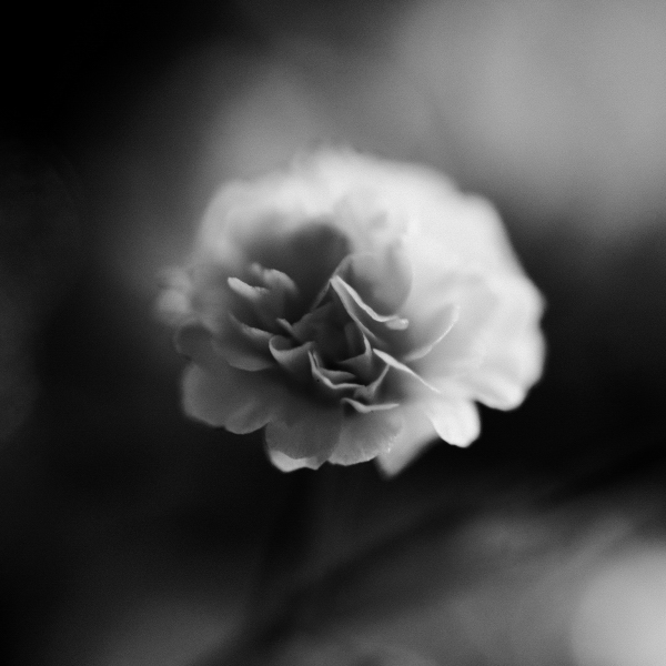花マクロ(白黒)