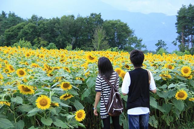 IMG_4633明野ひまわり畑