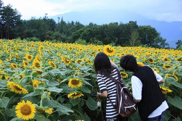 IMG_4637明野ひまわり畑