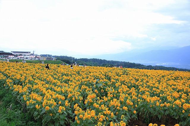 IMG_4646明野ひまわり畑