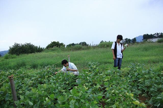 IMG_4665枝豆摘み体験