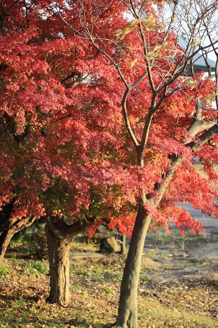 IMG_7773琵琶湖周辺