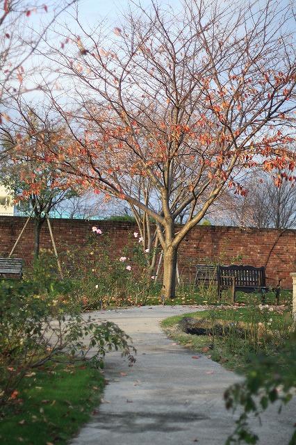 IMG_7780柳が崎湖畔公園