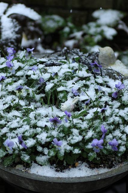 IMG_8359雪です