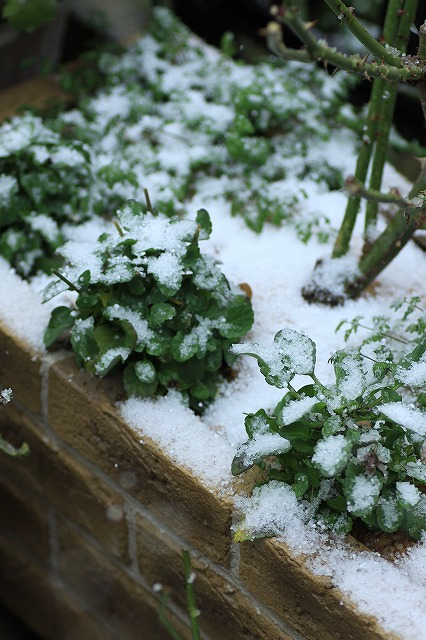 IMG_8395雪です