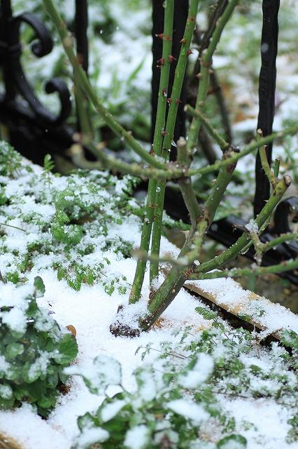 IMG_8397雪です