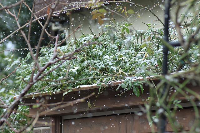 IMG_8413雪です