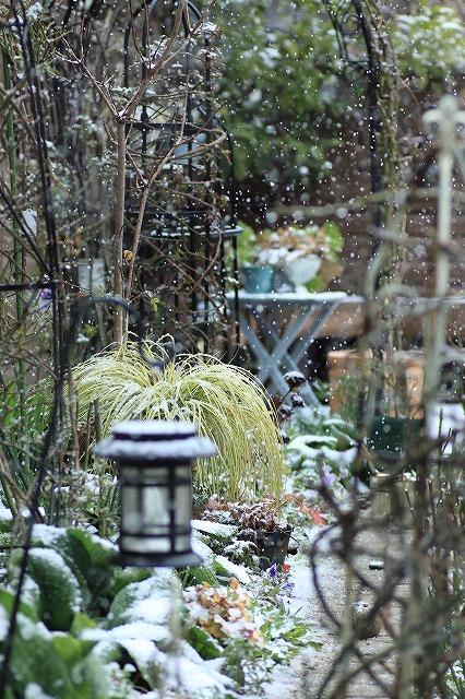 IMG_8421雪です