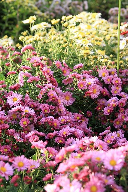 秋の母の庭