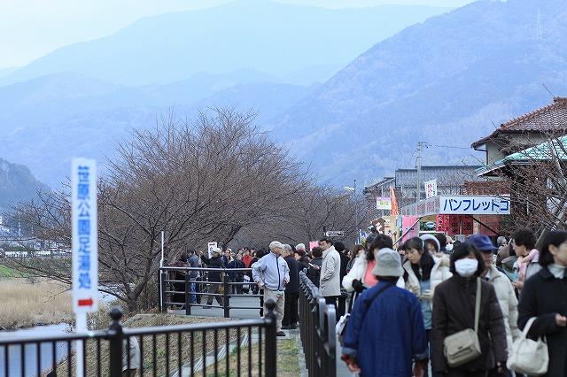 IMG_9363河津桜祭り