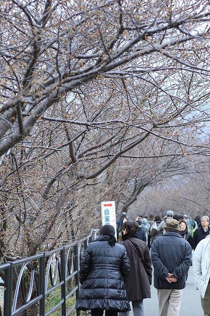 IMG_9368河津桜祭り