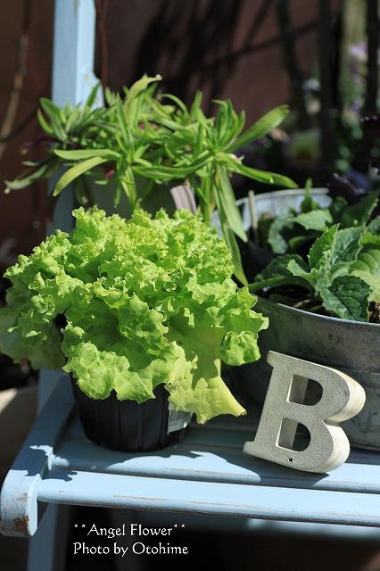 IMG_9775野菜も^^