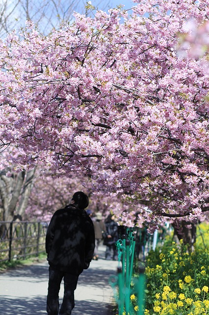 IMG_9955河津桜