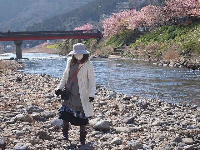 026河津桜