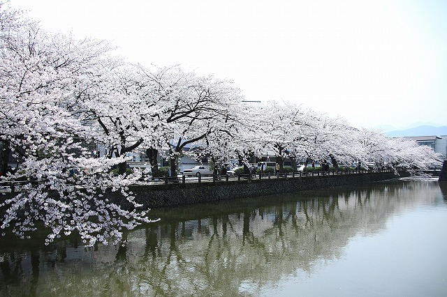 IMG_1524小田原城の桜