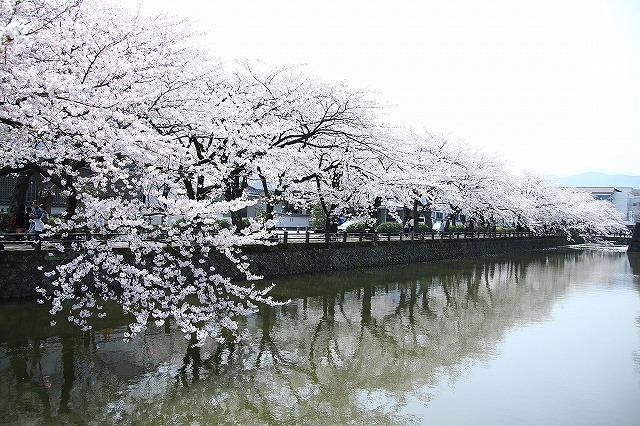 IMG_1528小田原城の桜