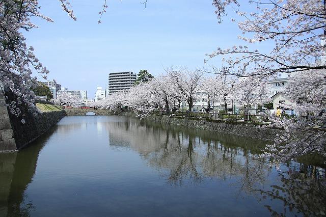 IMG_1545小田原城の桜