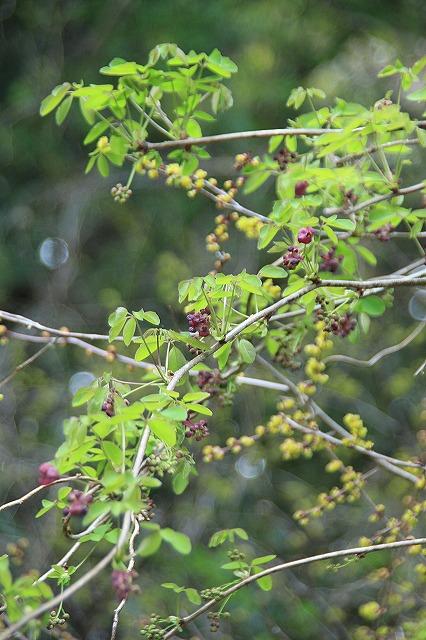 IMG_1601長興山の枝垂れ桜