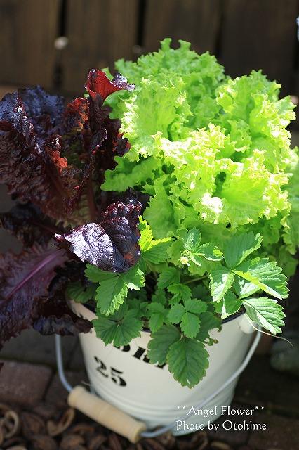 IMG_1726野菜