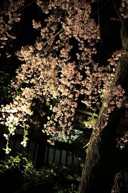 IMG_2095祇園白川