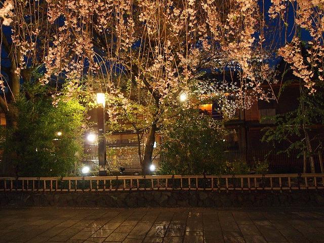 036祇園白川
