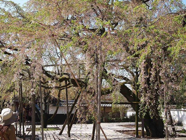 087醍醐寺