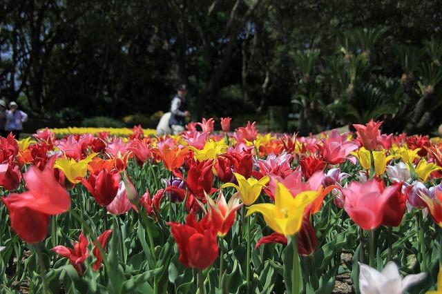 IMG_2331京都府立植物園