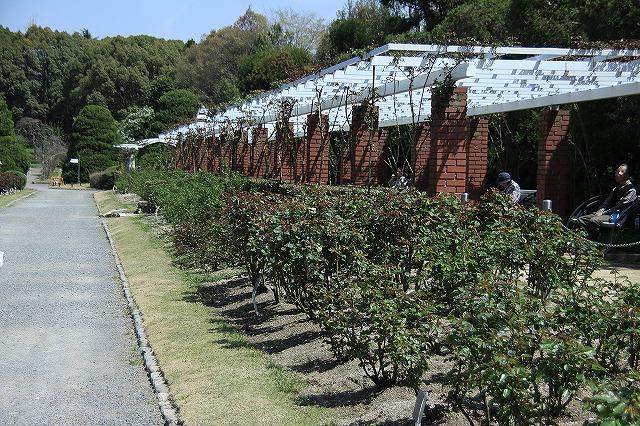IMG_2335京都府立植物園
