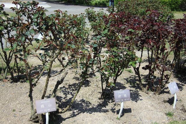 IMG_2342京都府立植物園
