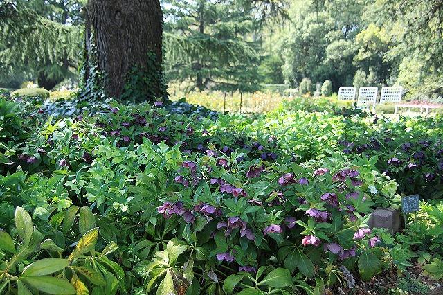 IMG_2351京都府立植物園