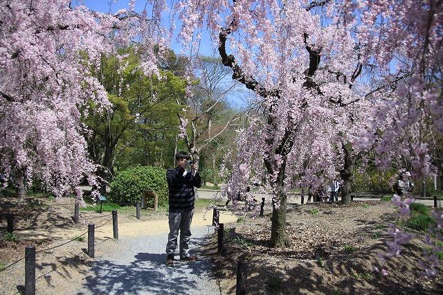IMG_2369京都府立植物園