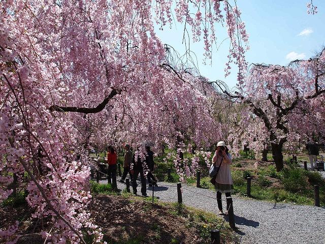 158京都府立植物園