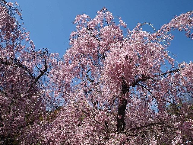 160京都府立植物園