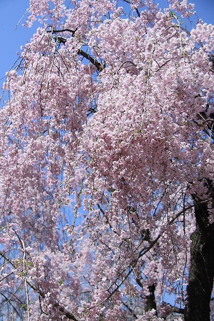 IMG_2379京都府立植物園