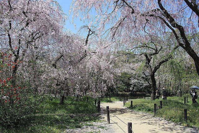 IMG_2388京都府立植物園