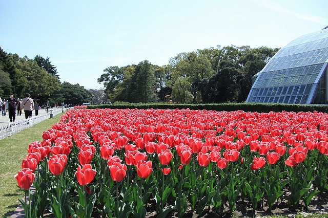 IMG_2398京都府立植物園