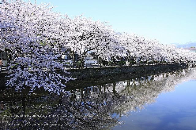 IMG_2030sakura.jpg