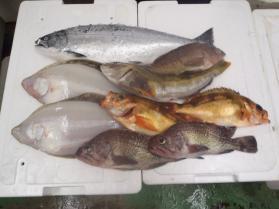 2鮮魚セット131