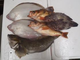 3鮮魚セット131