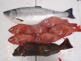 4鮮魚セット131